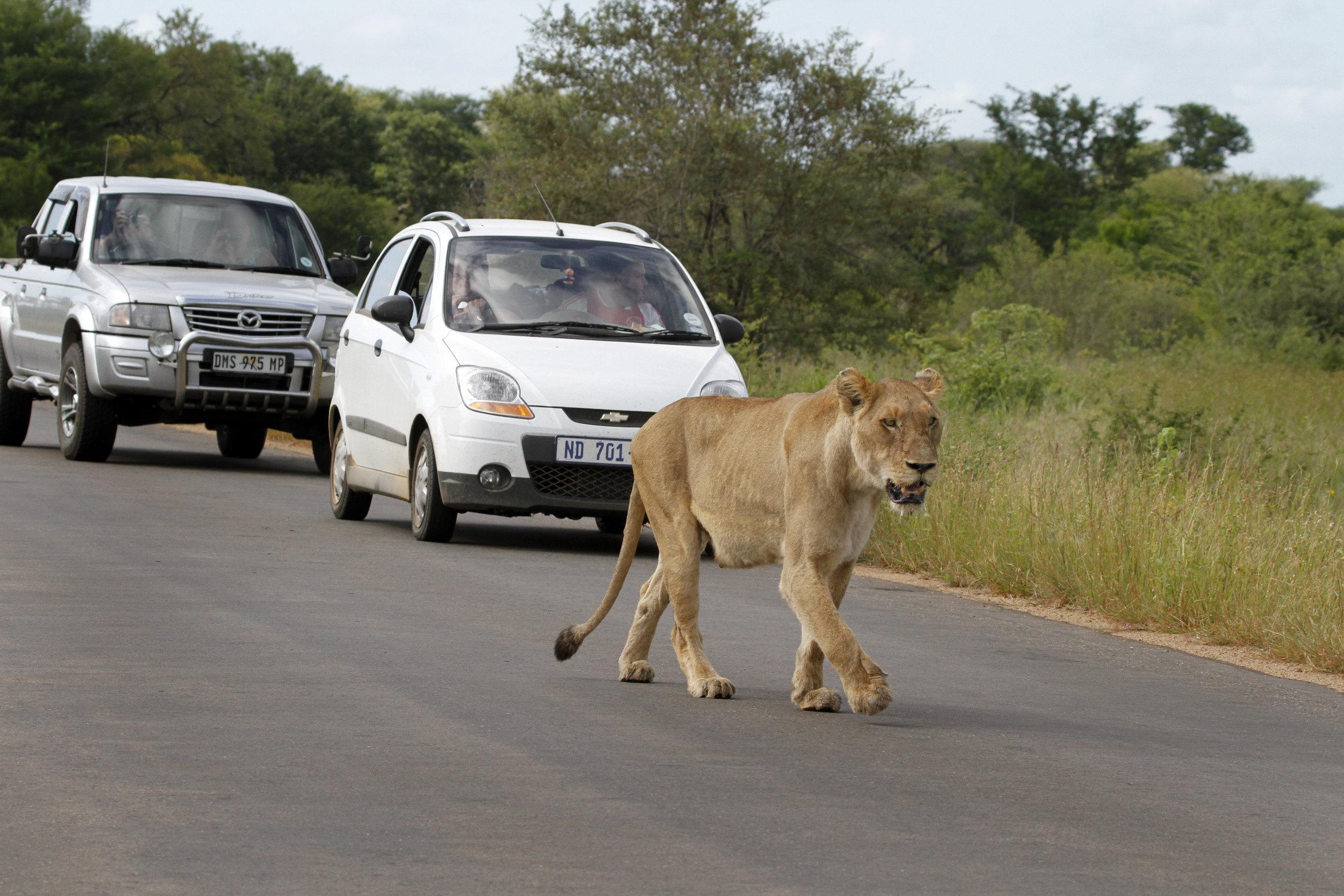 afrika wilde dieren